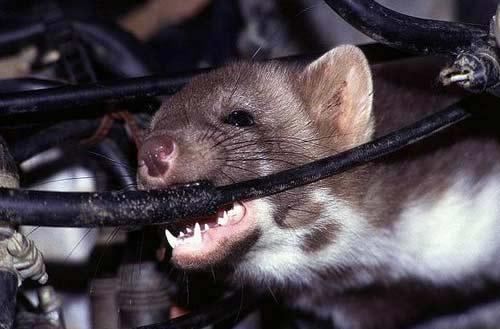 chuột bọ phá hoại máy giặt Electrolux